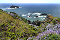 Pacific Coastline; just south of the Russian River estuary at Jenner; Sonoma County; California; USA. 20130429077<br /> <br /> Copyright Image from Victor Patterson, 54 Dorchester Park, Belfast, UK, BT9 6RJ<br /> <br /> Tel: +44 28 9066 1296<br /> Mob: +44 7802 353836<br /> Voicemail +44 20 8816 7153<br /> Skype: victorpattersonbelfast<br /> Email: victorpatterson@me.com<br /> Email: victorpatterson@ireland.com (back-up)<br /> <br /> IMPORTANT: If you wish to use this image or any other of my images please go to www.victorpatterson.com and click on the Terms & Conditions. Then contact me by email or phone with the reference number(s) of the image(s) concerned.