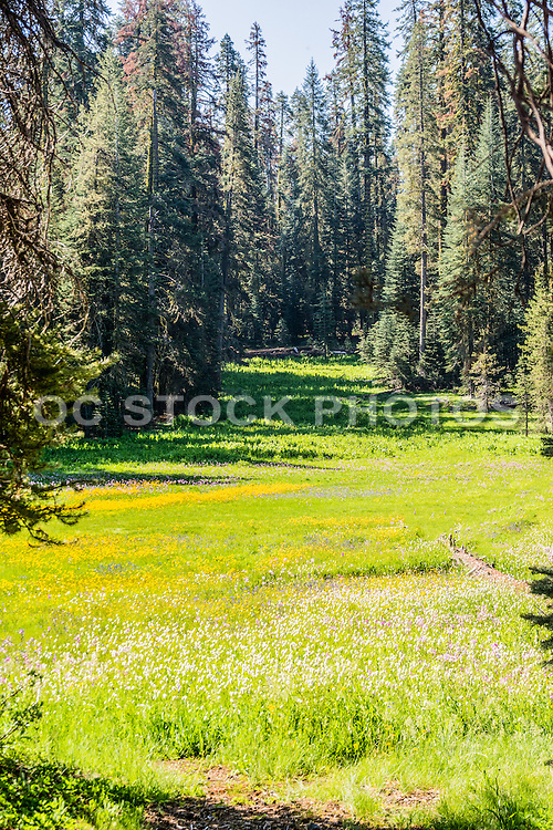 Alpine Meadow in Yosemite National Park