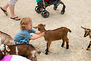 A boy pets a goat kid at The Farm, Door County, Wisconsin, USA