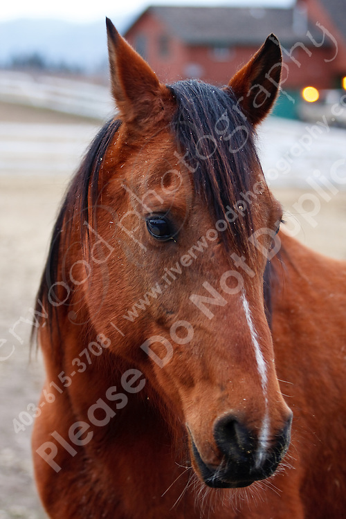 Horses in a corral in Winfield, BC...©2009, Sean Phillips.http://www.Sean-Phillips.com
