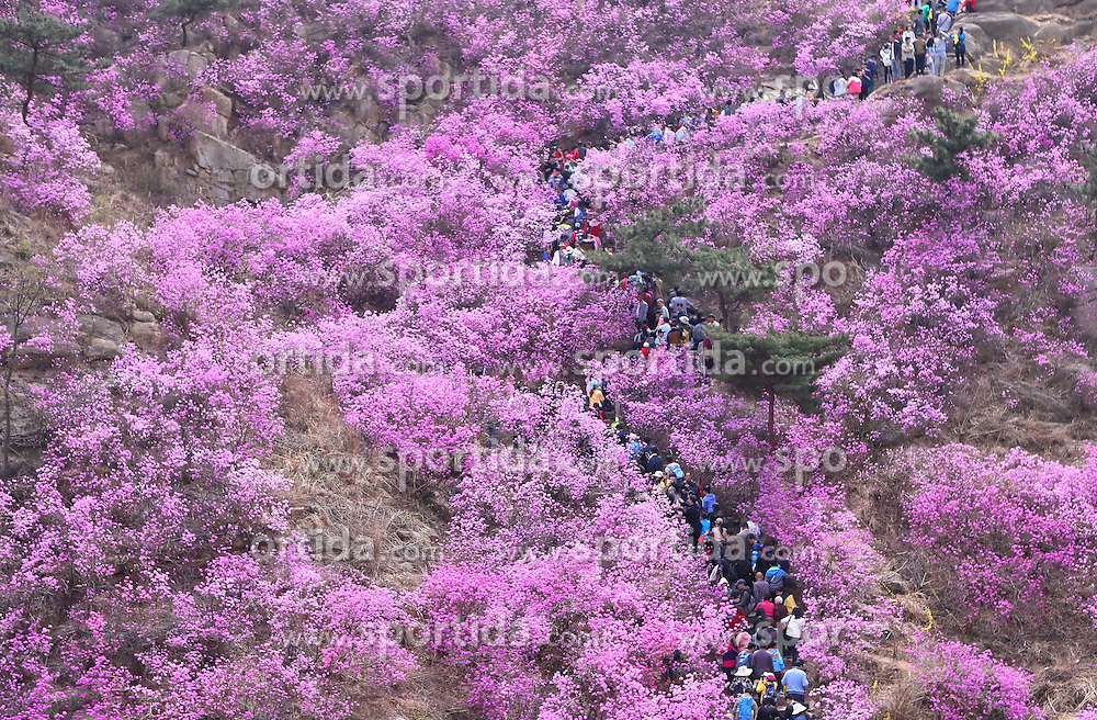 Tourists view azalea blossoms on the Dazhu Mountain in Qingdao, east China's Shandong Province, April 5, 2016. EXPA Pictures © 2016, PhotoCredit: EXPA/ Photoshot/ Liao Xiaopeng<br /> <br /> *****ATTENTION - for AUT, SLO, CRO, SRB, BIH, MAZ, SUI only*****
