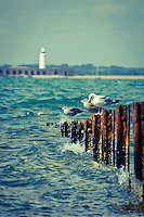 Looking across to Hurst Spit and the Lighthouse with a few gulls and a rusty groyne in the foreground. Vintage tones to complement the rusty groyne.<br /> <br /> Single frame shot with the Sigma 50-500mm lens at f5.6  1/640<br /> <br /> Part of the Ocean Seen - Oceanic Photography Exhibition.<br /> <br /> Sponsored by Wightlink - Dimbola Museum & Galleries, Freshwater Bay, Isle of Wight - 29th June to 2nd September 2012.<br /> <br /> A collaborative summer show, bringing together three great oceanic photographers to celebrate the way we interact with our great British coastline.