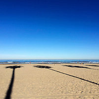 USA, California, La Jolla, Palm Shadows on La Jolla Shores Beach.