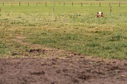 THEMENBILD - eine Kuh liegt auf einer Weide, aufgenommen am 10. Juni 2019 in Kaprun, Österreich // a cow lies in a pasture, Kaprun, Austria on 2019/06/10. EXPA Pictures © 2019, PhotoCredit: EXPA/ JFK