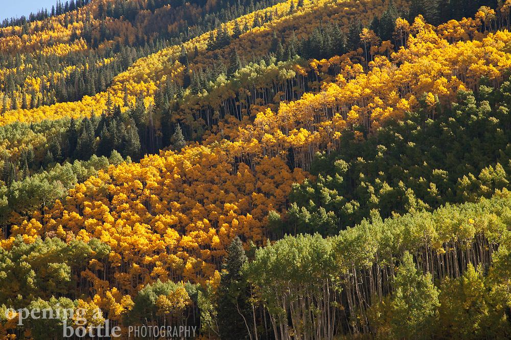 Fall color in the Castle Creek Valley south of Aspen, Colorado.