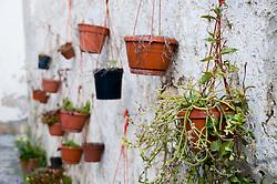 Alessano (Lecce) - Composizione di piante in vaso lungo un muro.