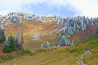 Hikers start up the switchbacks on the Golden Gate trail in the Paradise Meadows in Mount Rainier National Park, WA, USA.  The trees carry a frosting of snow from earlier in the day.