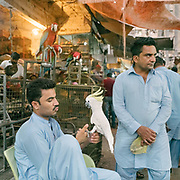 Two bird sellers wait for costumers, holding a parrot. Situated in the Saddar Town locality of Karachi, the Empress market traces its origins to the British Raj era.