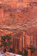 Juniper and water stained sandstone cliff in winter, Grand Gulch, Waterpocket Fold, Capitol Reef National Park, Utah.