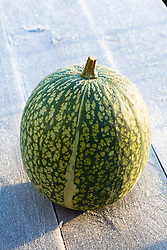 Fig leaved gourd displayed on a frosty table
