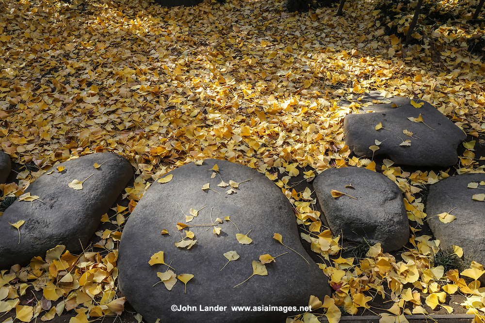 Otaguro Garden is part of the estate of Moto Otaguro, the musician, critic and scholar who introduced Debussy to Japan. The garden is famous for its 80 year-old gingko trees, pond, and pavilion.  Built on the site of Otaguro's residence, this Japanese garden features a stone paved walkway lined with gingko trees, a tearoom, a carp pond, and a villa that was once Otaguro's office but is now open to the public as a museum.
