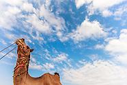 India: Pushkar Camel Fair