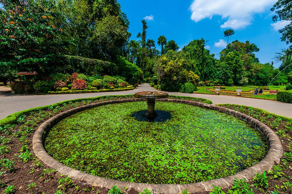 Royal Botanical Gardens, Peradeniya, Kandy, Central Province, Sri Lanka.