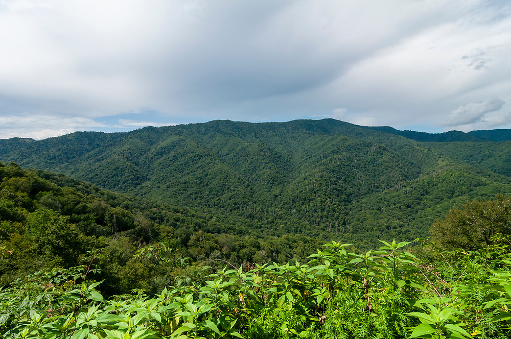 View of Mount Kephart at the History Exhibit Overlook in Great Smoky Mountains National Park in Cherokee, North Carolina on Thursday, August 13, 2020. Copyright 2020 Jason Barnette