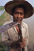 PEASANT FARMING, Malaysia. Peasant farmers working hoe, in padi, Kedah State. World Bank funded  project. Poor farmers, peasants, planting, harvesting, cultivating rice padi.