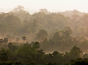 Mist drifting through the forest at Angkor, Siem Reap Province, Cambodia