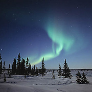 Aurora borealis or Northern Lights in Wapusk National Park near Churchill, Manitoba. Canada.