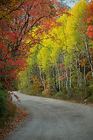 Dirt road through the Wasatch mountains in the peak of Fall colors.