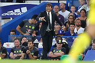 Antonio Conte, the Chelsea manager shouting from the touchline. EFL Cup 2nd round match, Chelsea v Bristol Rovers at Stamford Bridge in London on Tuesday 23rd August 2016.<br /> pic by John Patrick Fletcher, Andrew Orchard sports photography.