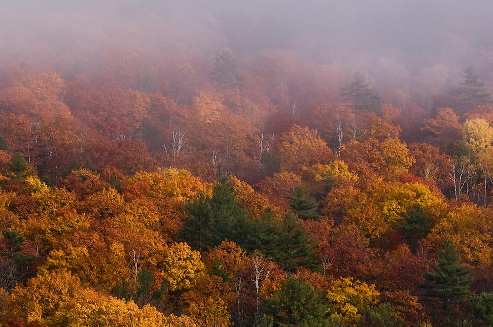 Sugar Hill, hillside in fall colors and rising fog, detail shot, Bristol, NH