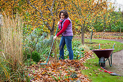 Clearing autumn leaves from a flower bed
