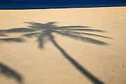 Shadow of palm tree traced on sandy beach Nilavelli, near Trincomalee, Eastern province, Sri Lanka, Asia