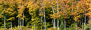 Fall foliage color at a small beaver pond (near the Shilly Shally Shelter) in Gatineau Park, Gatineau, Québec, Canada.  Photographed from the Lac Fortune Parkway during Fall Rhapsody at Gatineau Park.