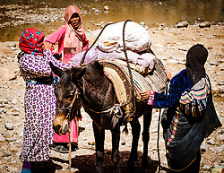 A group of women loading a donkey by the Todra River, Morocco<br /> <br /> (c) Andrew Wilson   Edinburgh Elite media