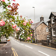 Betws-y-Coed Village Street with Roses. The village of Betws-y-Coed in the heart of the Snowdonia National Park is a popular base for hikers heading into the surround mountains.