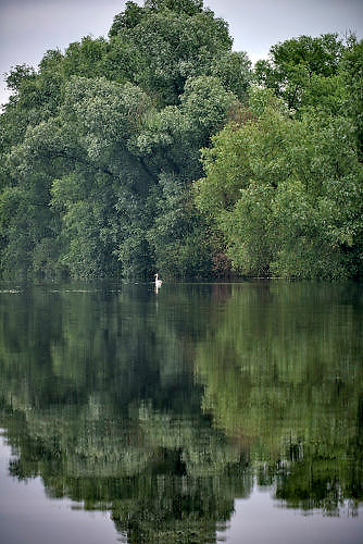 Nederland, Kekerdom, 21-5-2017Beversafari met kano in de Millingerwaard. Om het water dat via Lobith binnenkomt goed te verdelen over het Pannerdensch Kanaal en de Waal én om de waterstand te laten dalen in tijden van hoog water, wordt de Millingerwaard verruimd voor een betere waterveiligheid.Er wordt een geulenpatroon gegraven bestaande uit kwelgeulen en een grote stroombaangeul. FOTO: FLIP FRANSSEN