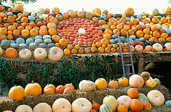 Pumpkins displayed on the roof at The Lodge, Slindon