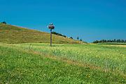 Bocianie gniazdo w okolicy Baranowa, Polska<br /> Stork nest in the Baranowo area, Poland