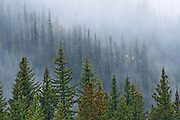 Fog and snow in autumn in the Canadian Rocky Mountains<br />Kananaskis Country<br />Alberta<br />Canada