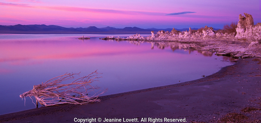 Vibrant colorful sunrise on monolake, California with dead bush in the foreground.