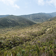The landscape of the heath zone on Mt Kilimanjaro's Lemosho Trail.