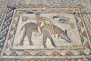 Roman mosaic in the House of the Athlete or Desultor, located near the forum, contains a humorous mosaic of an athlete or acrobat riding a donkey back to front while holding a cup in his outstretched hand. It may possibly represent Silenus also known as the wine God Dionysus or Bacchus. Volubilis Archaeological Site, near Meknes, Morocco .<br /> <br /> If you prefer to buy from our ALAMY PHOTO LIBRARY  Collection visit : https://www.alamy.com/portfolio/paul-williams-funkystock/roman-mosaic.html - Type -   Volubilis    - into the LOWER SEARCH WITHIN GALLERY box. Refine search by adding background colour, place, museum etc<br /> <br /> Visit our ROMAN MOSAIC PHOTO COLLECTIONS for more photos to download  as wall art prints https://funkystock.photoshelter.com/gallery-collection/Roman-Mosaics-Art-Pictures-Images/C0000LcfNel7FpLI