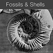 SHELLS - Abstract Solaroid Art Photos  by Photographer Paul E Williams