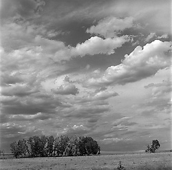Clouds over a grove of trees on a ranch in New Mexico