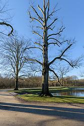 Baarnse Bos, Baarn, Utrecht, Netherlands