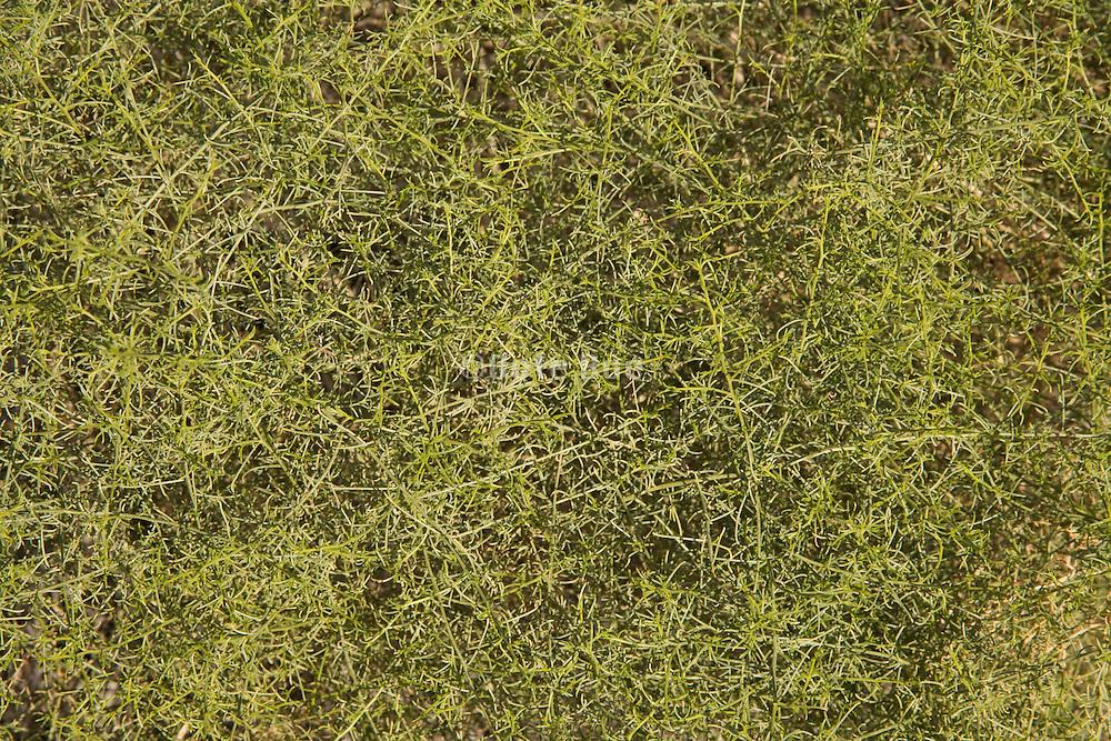 extreme close up of desert bush in California