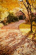 Fallen golden leaves in autumn on a cottage garden.