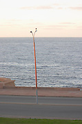Coast line with an empty street a street. A lamp post with a lone single sea gull against the horizon. At dawn. Montevideo, Uruguay, South America