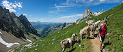 Hikers meet cows at Rotsteinpass (2120 m) in Switzerland, Europe. In the background, a transmission tower caps Säntis (2502 m), the highest mountain in the Alpstein massif of northeastern Switzerland, and highest of the Appenzell Alps. Appenzell Innerrhoden is Switzerland's most traditional and smallest-population canton (second smallest by area). This image was stitched from multiple overlapping photos.