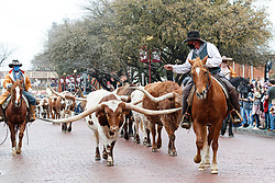 Drovers moving Texas longhorns on East Exchange  Ave. during daily Fort Worth Herd Cattle Drive, Fort Worth Herd  Fort Worth Stockyards National Historic District, Fort Worth, Texas, USA.