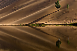 August 13, 2017 - China - Inner Mongolia, CHINA-August 13 2017: (EDITORIAL USE ONLY. CHINA OUT) Populus trees can be seen in desert in north China's Inner Mongolia. (Credit Image: © SIPA Asia via ZUMA Wire)
