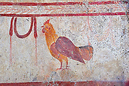 Lucanian fresco tomb painting of a cockerell. Pastrum 3rd Century BC .<br /> <br /> If you prefer to buy from our ALAMY PHOTO LIBRARY  Collection visit : https://www.alamy.com/portfolio/paul-williams-funkystock - Scroll down and type - Paestum Fresco - into LOWER search box. {TIP - Refine search by adding a background colour as well}.<br /> <br /> Visit our ANCIENT GREEKS PHOTO COLLECTIONS for more photos to download or buy as wall art prints https://funkystock.photoshelter.com/gallery-collection/Ancient-Greeks-Art-Artefacts-Antiquities-Historic-Sites/C00004CnMmq_Xllw