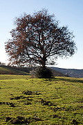 old tree on top of a hill in a grassland landscape