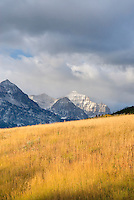 Prairie grasses in autumn at Two Dog Flats, Glacier National Park Montana USA