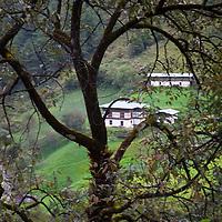 Asia, Bhutan, Trongsa. Treee and Landscape scene of Bhutan.