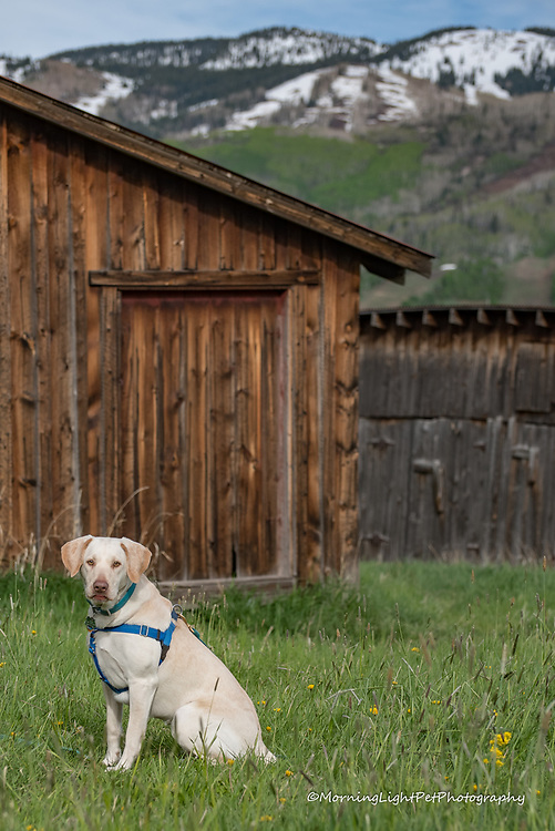 Scenic Outdoor Pet Photography